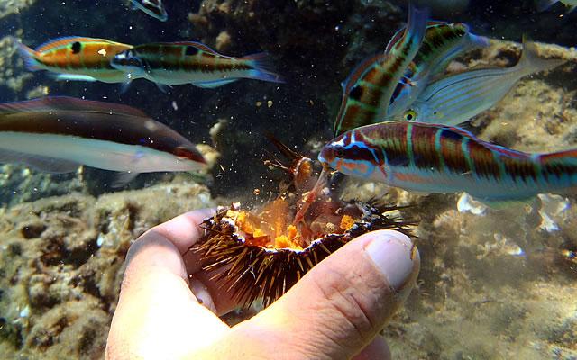 Snorkeling tra i pesci Tropea