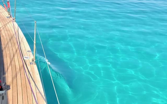 Noleggio gommoni a Tropea e in tutta la Costa degli Dei